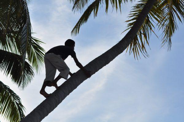 Classic Tree Climbing